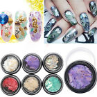 New Colorful Crushed Shell for False Acrylic Gel Tip Nail Art Decoration Fashion