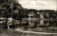 Königsfeld Schwarzwald  AK 1965 Partie am See Schwäne Wald Uferweg ungelaufen