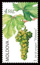 Moldova 2010 Plants Grape MNH stamp