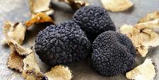 Seeds Mushroom Truffle Black Dried Mycelium Spawn Substrate Russian Ukraine