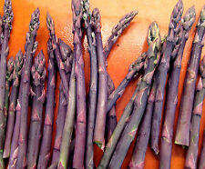 Purple Passion Asparagus 2 Year Old Plants Crowns Roots Bare Root 25 Each