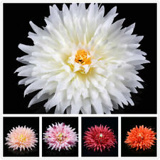 "Wholesale Large Chrysanthemum 4.7"" Artificial Silk Flower Heads for Craft Decor"
