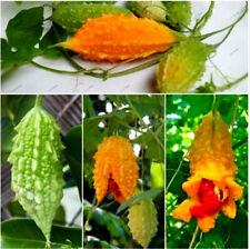 20 Momordica Vegetable Seeds Mixed Bitter Pumpkin Cucumber Vine Exotic Herb