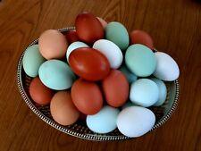 12 Oeufs fécondés à couver multi couleurs
