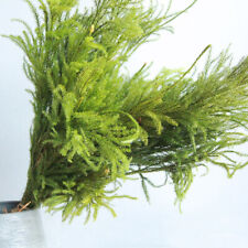 1 Bunch Dried Flowers Lycopodium Natural Plant Home Wedding Party Floral Decor