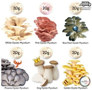 (White + Pink + Blue Pearl + Phoenix + King + Golden) Oyster Mushroom Mycelium