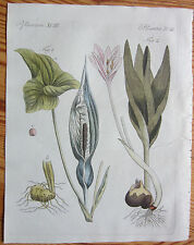 Bertuch: Handcolored Print Arum Meadow Saffron - 1799#