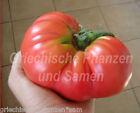tomate brandywine PINK antigua VARIEDAD DE TOMATE 10 Semillas