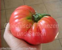 🔥 🍅 Tomate * BRANDYWINE PINK * alte Tomaten Sorte*10 Samen