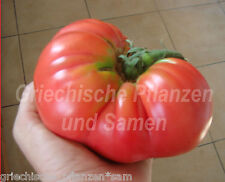 Tomate * BRANDYWINE PINK * alte Tomaten Sorte*10 Samen