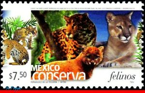 2424 MEXICO 2005 CONSERVATION, CATS, FELINES, (7.50P), MNH