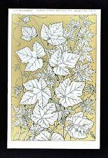 1868 Owen Jones Ornament Print Leaves from Nature No 2 Grape Vines etc Botanical