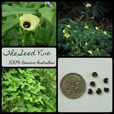 20 MUSK MALLOW SEEDS (Abelmoschus moschatus) Medicinal Okra Edible Flower Indian