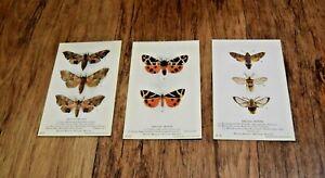 3 x Vintage British Moths moth Postcards postcard UK SELLER