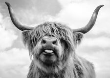 HIGHLAND COW WALL ART * LARGE A3 SiZE QUALITY CANVAS PRINT