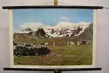 Scheda crocifissi Muro Carta lama Alpaca Perù animali mandria Ande Lamas alpakas 75x51