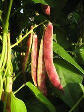 Dark Red Kidney Bean Phaseolus vulgaris Seeds (15 Nos) X-098
