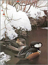 Hooded Mergansers In Winter by Robert Bateman Limited Edition Print