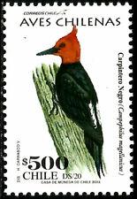 CHILE, CHILEAN BIRDS, BLACK WOODPECKER, MNH, YEAR 2003