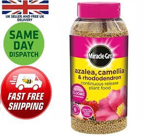 Miracle-Gro Azalea Camellia Rhododendron 20 Plant Food Treat 1kg Nutrients Grow