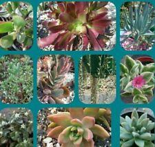 Cutting/Leaf Clay Full Sun Plants & Seedlings