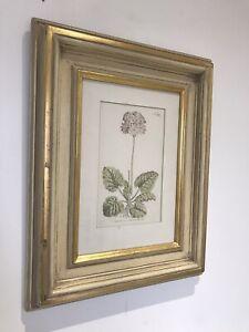 Superb Vintage Primula Cortusoides Cotusa Leaved 1798 Antique Botanical Print