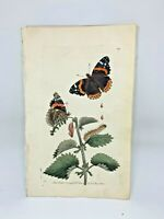 Atalanta Butterfly - 1783 RARE SHAW & NODDER Hand Colored Copper Engraving