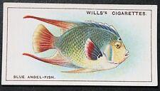 Angel Fish   Tropical Coral Reef Fish  Original Vintage Colour Card ### VGC