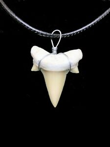 OTODUS TOOTH REAL SHARK NECKLACE FOSSIL PENDANT GREAT WHITE MEGALODON ANCESTOR
