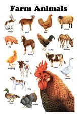 Farm Animals Poster, Horse, Pig, Chicken, Cow, Rooster