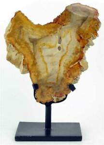 Fossiles versteinertes Holz Petrified Wood Natur UNIKAT