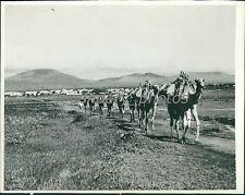 1935 Italio-Ethiopian War Camels Bring Supplies Original News Service Photo