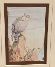 ANTIQUE Mounted Original Print (1909) - E Detmold Fables of Aesop