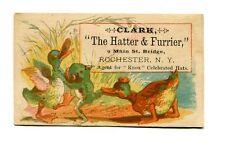 Victorian Trade Card CLARK HATTER & FURRIER Rochester NY Ducks & Frog fighting