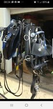 driving harness fullsize trade with bluetrim horseshoe buckles gypsy bowtop