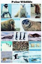 ANIMALS ~ POLAR WILDLIFE POSTER Bear Penguin Seal