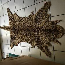 Leopard Skin Rug Wall Hanging pre 1943 Gd Condition Photo of Owner w/Rug