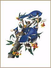 Blue Jay Bird Birds Watching Portrait Art Poster 10 x 13.5 inches