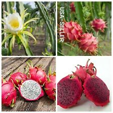 30+ Seeds Dragon Fruit Mix (Red, White) HEIRLOOM NON-GMO USA-SELLER !