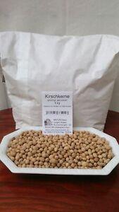 Kirschkerne 5kg Top Qualität, gereinigt, thermisch behandelt für Wärmekissen
