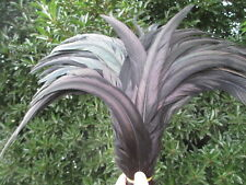 Beautiful black rooster tail feathers 10 pcs 12-14 inch / 30-35 cm Free shipping