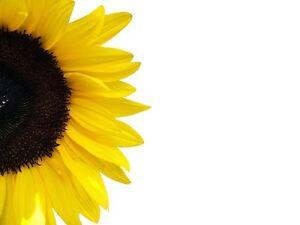 Naturel 100% Pur Tournesol Huile Bio 100ml 500ml 1L Support de massage de base