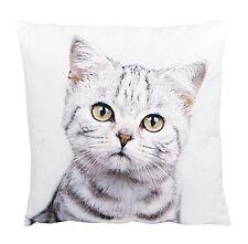 """Innocent Kitten Cushion Tabby Cat Ashdene Throw Pillow Velvet 12.5"""" Square Cats"""