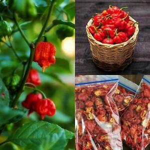 20 DRIED CAROLINA REAPER PEPPER Pods - WORLDS HOTTEST Pepper - Super Hot Quality