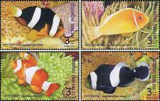Anemonefish (Clownfish) (MNH)