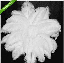 New wholesale 500pcs 12-14inches/30-35cm white ostrich feathers decor wedding