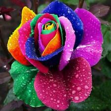 1000Pcs Beautiful Colorful Rainbow Rose Flower Seeds Yard Garden Plant Decor