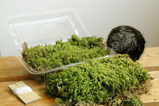 Natural Moss Ball Kokedama Making Kit Made in japan