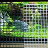 30cmx15cmx0.8cm Moosgitter Gitter Grid für Aquarium Garnelen Fisch Deco W3D7