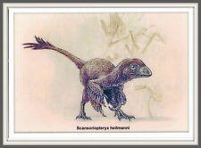 DINOSAUR Scansoriopterygidae CHINA Hebei 辽宁 Liaoning 河北 Prehistoric BIRD card #2